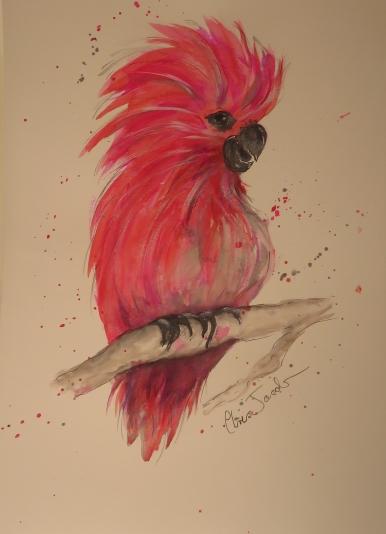 Pink Galah - Framed Watercolour $60