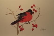 Red Robin - Framed Watercolour - $45