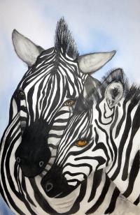 Zebras - Framed 54 x 70cm Watercolour and graphite